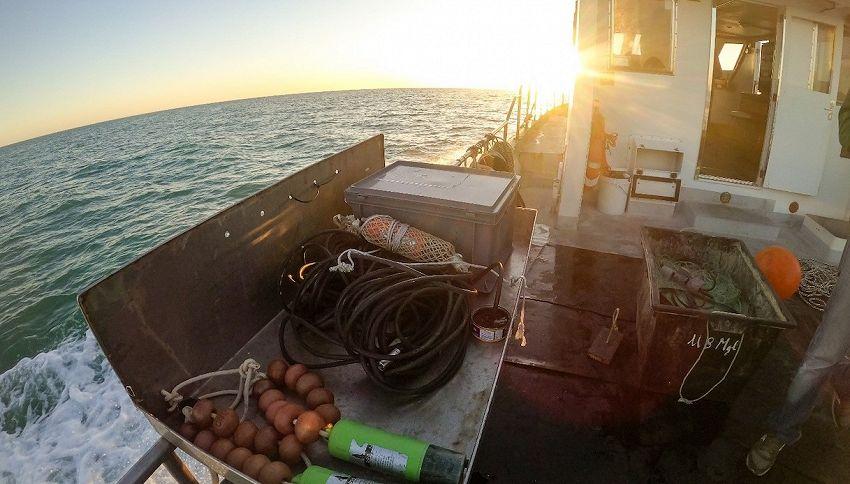 I rescue team di Life Delfi per salvare i cetacei impigliati
