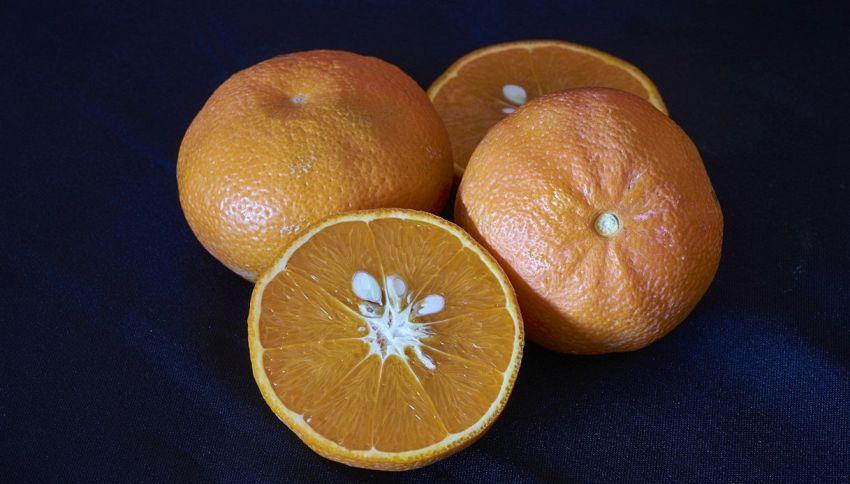Fai attenzione a non buttare i semi dei mandarini