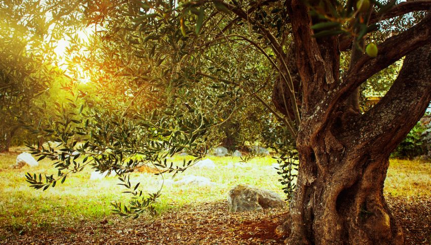 'Scuola Forestami', Milano e l'educazione sugli alberi