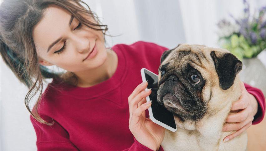 Sai quante parole i cani possono capire e imparare?