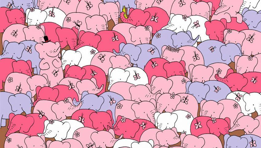 Riesci a trovare il cuore nascosto tra gli elefanti?