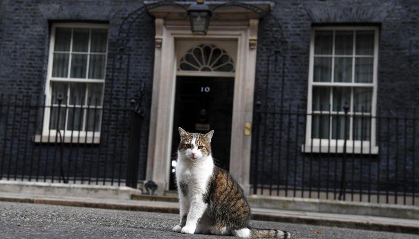 Dieci anni a Downing Street: il gatto Larry e il debole per Obama