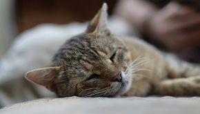 La storia dei gatti salvati dai marinai su una nave in pericolo