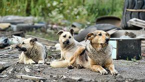 'Stray', il documentario con protagonisti tre cani randagi