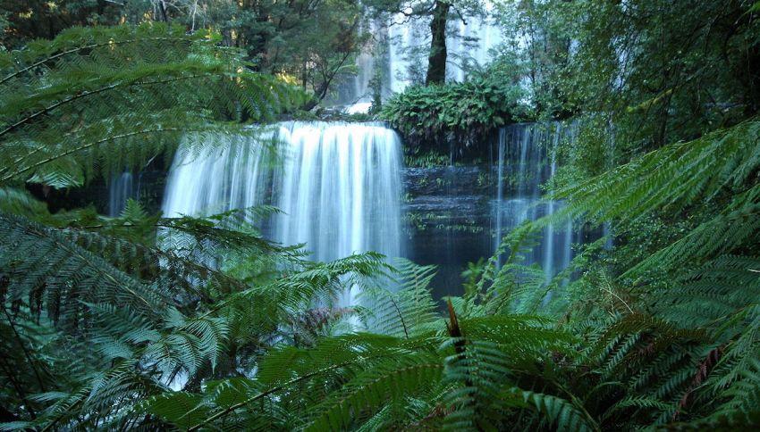Ereditano 1,6 milioni di dollari e salvano una riserva tasmaniana