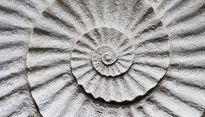 Bambino trova un fossile di 400 milioni di anni in giardino