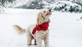 L'amicizia speciale tra una bimba e il suo cane malato