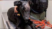 Il cagnolino maltrattato che aiuterà i bimbi ustionati