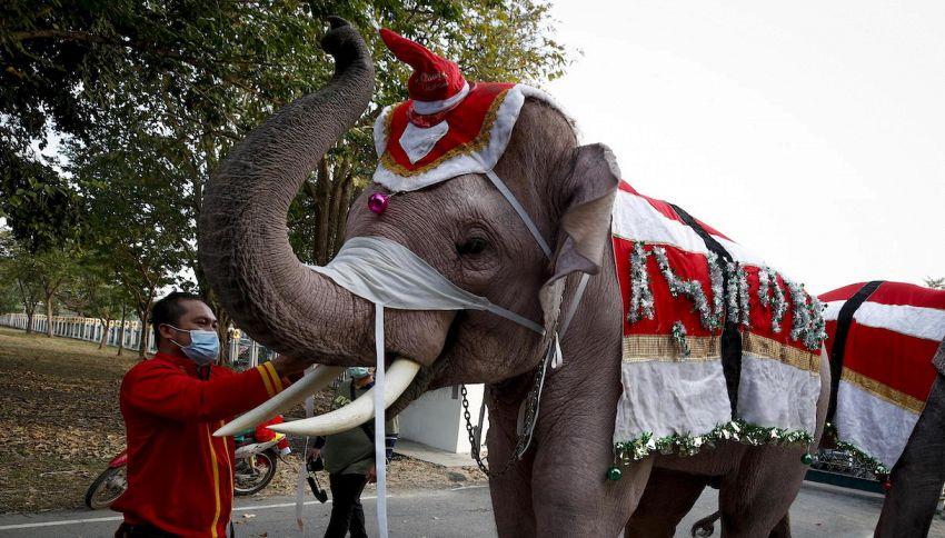 Web contro un magnate indiano per la foto dell'elefante vestito