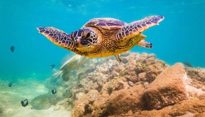 La maionese usata per salvare le tartarughe marine. Ecco come