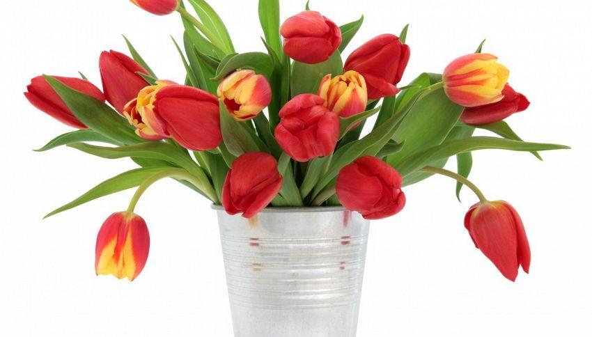 Tulipani in vaso, il segreto per farli durare più a lungo