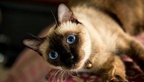 Wad, la gatta più anziana del mondo ha 34 anni