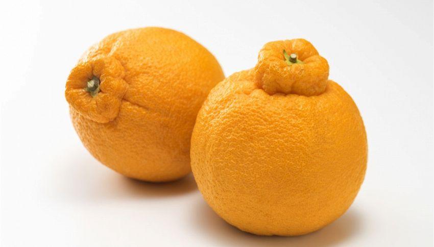 Queste arance stanno spopolando sul web. Il motivo