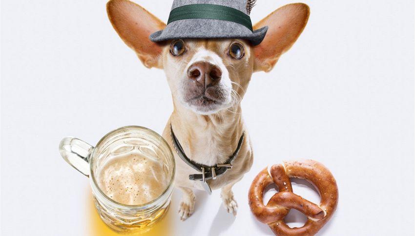Il tuo cane potrebbe essere assunto per degustare la birra