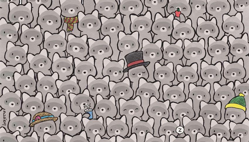 Nuova sfida: trova il gatto nascosto tra i procioni