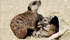 Il Bioparco di Roma ha dato il benvenuto a sei nuovi cuccioli
