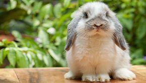Cookie, il coniglietto che ama lo skate