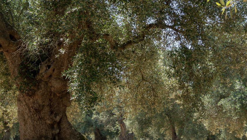 In Italia esistono più di 3600 alberi monumentali