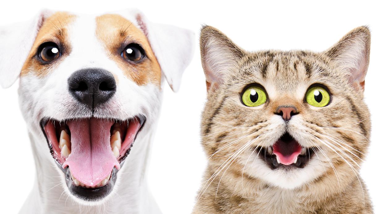 Anche gli animali ridono, lo dimostra una ricerca