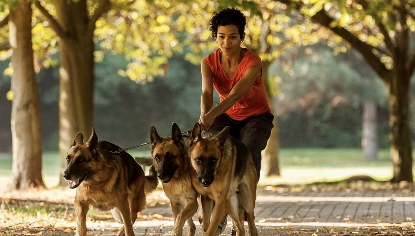Il museo pet friendly che mette a disposizione un dog sitter