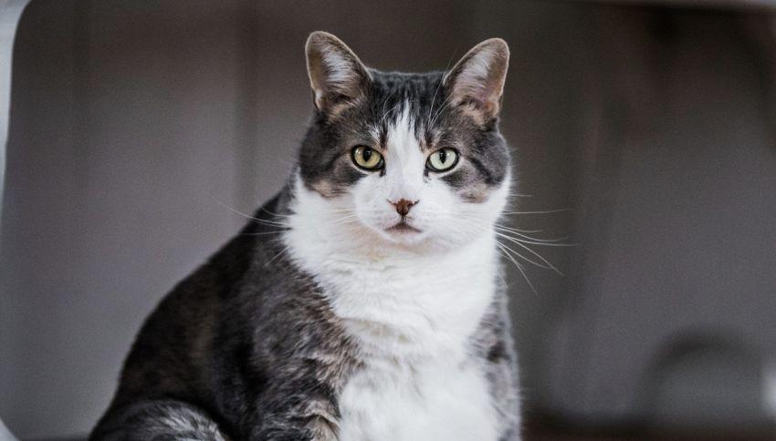 Scopre che il gatto lo 'tradisce' da un annuncio immobiliare