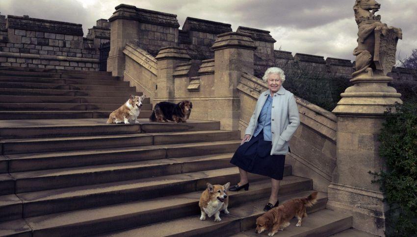 Animali senzienti per legge: la rivoluzione di Elisabetta II