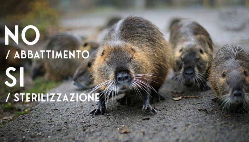 Ravenna, petizione per salvare una famiglia di nutrie: la storia