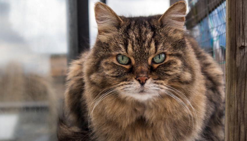 Cos'è il catio, il patio per gatti di cui tutti parlano