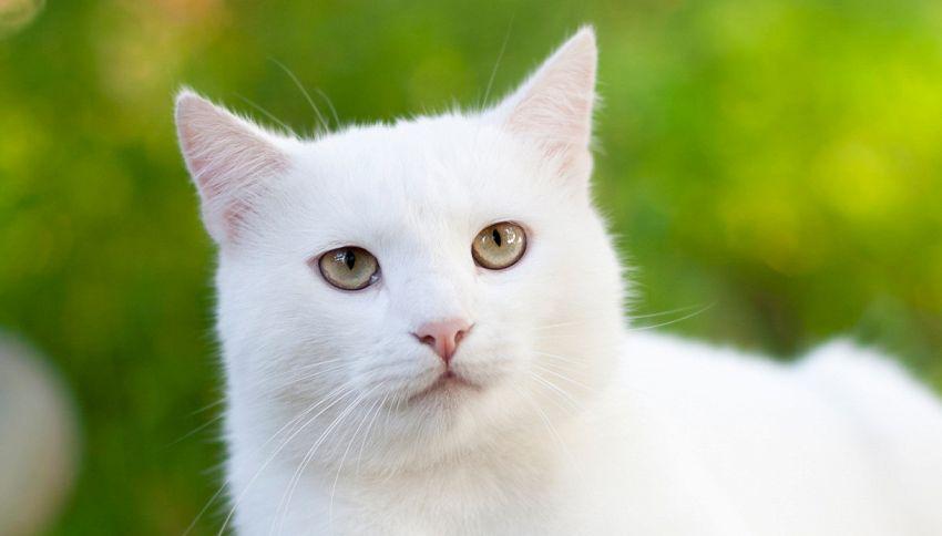 Achille, il gatto indovino (che fa pronostici anche su Euro 2020)