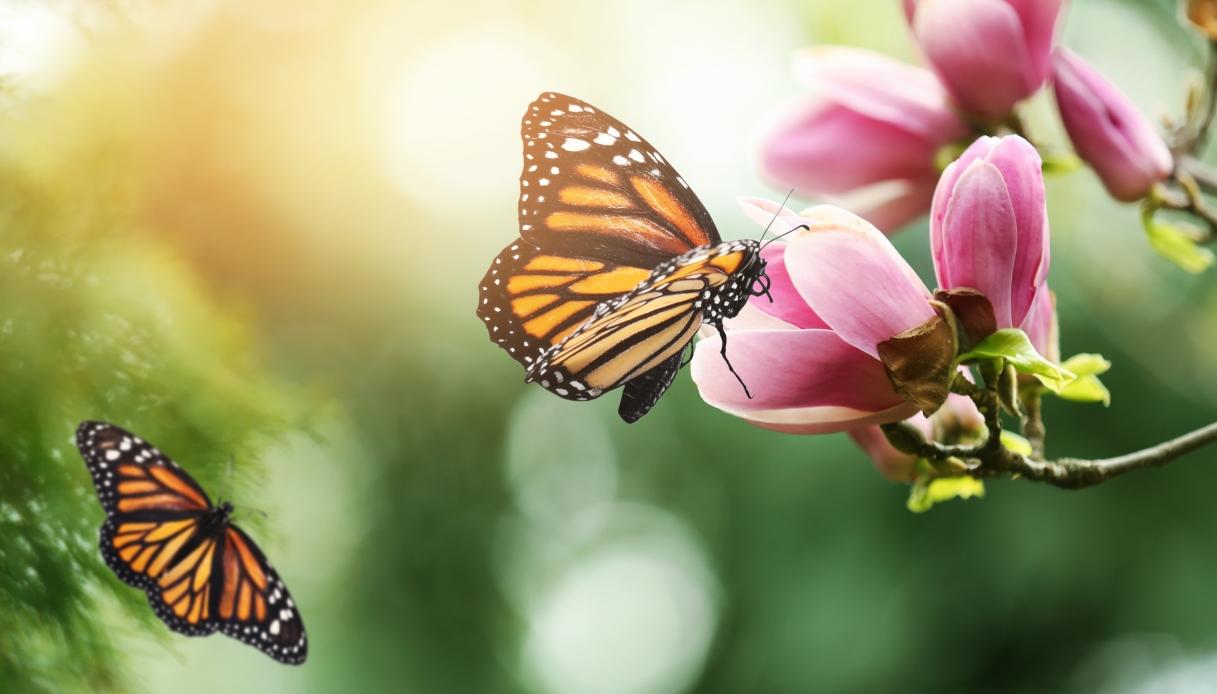 Nel Regno Unito c'è un censimento per salvare le farfalle