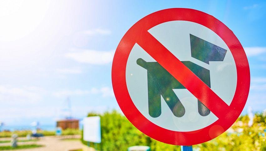 Tursi, il sindaco vieta le piazze ai cani