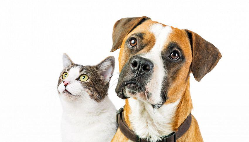 Mako, il cane convinto di essere un gatto