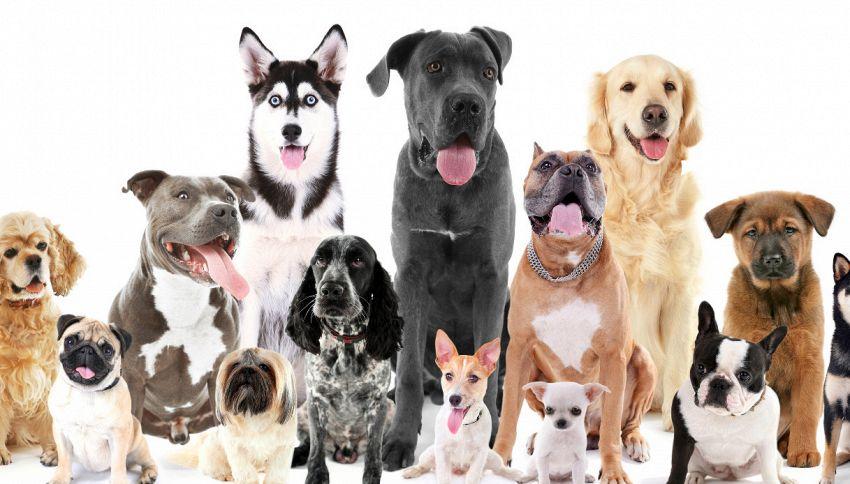 Cani, le cinque razze più grandi al mondo