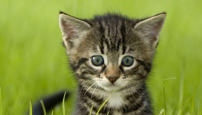 In questa città è stato imposto un coprifuoco ai gatti