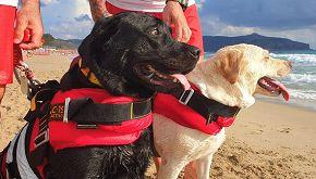 A Palinuro due cani eroi salvano una giovane bagnante dalle onde