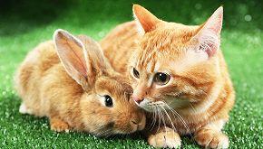 Lieto fine per i leprotti salvati dalla gatta Dea: la storia