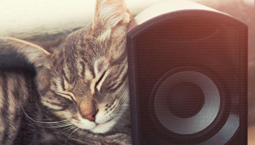 Festa clandestina? La polizia trova un gatto che ascolta musica