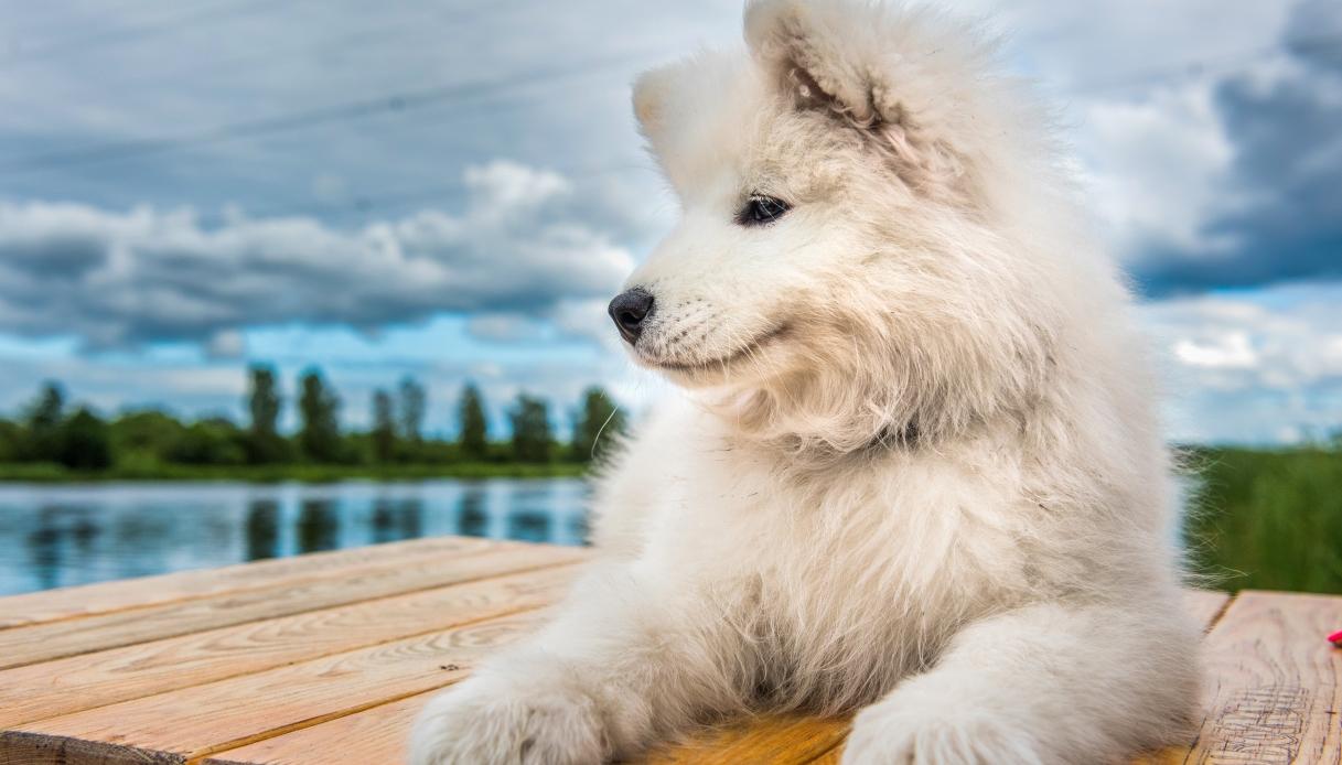 L'oca e la cagnolina: storia di un'amicizia speciale