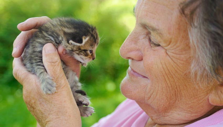 La casa di riposo adotta una gattina per i suoi ospiti