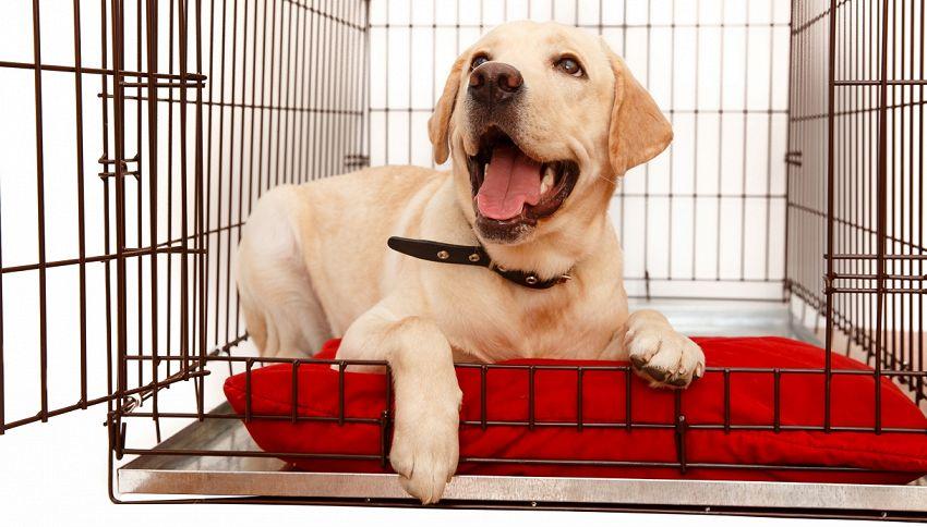Il canile si svuota: per la prima volta tutti i cani trovano casa