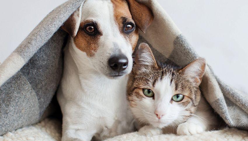 Il cane e gatto che guidano insieme uno scooter sono da record
