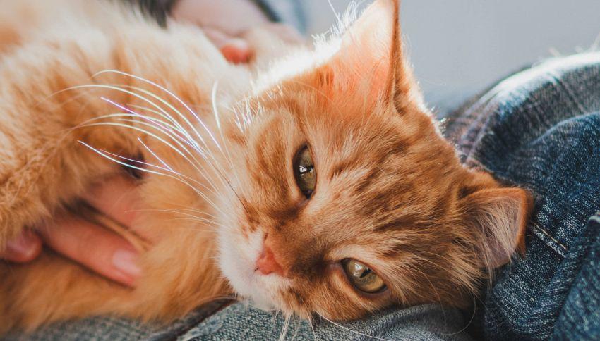 Perché guardare video dei gatti fa bene