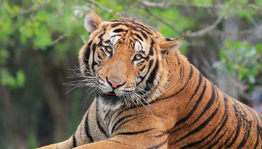 L'hotel in cui è possibile dormire con le tigri