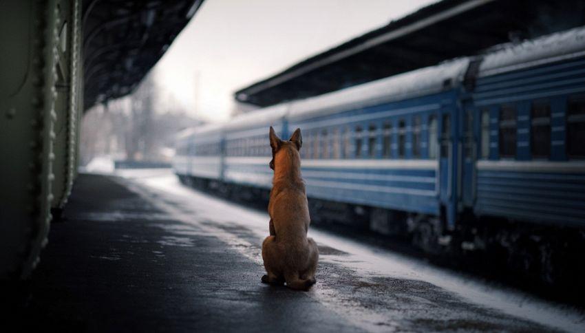 Il cane che percorre 30 km sui mezzi pubblici di Istanbul