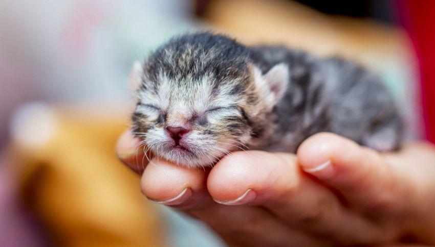 Piper, l'ultimo micio della cucciolata con un coraggio da leone