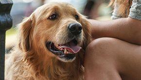 Neesha, la storia della cagnolina salvata da due escursionisti