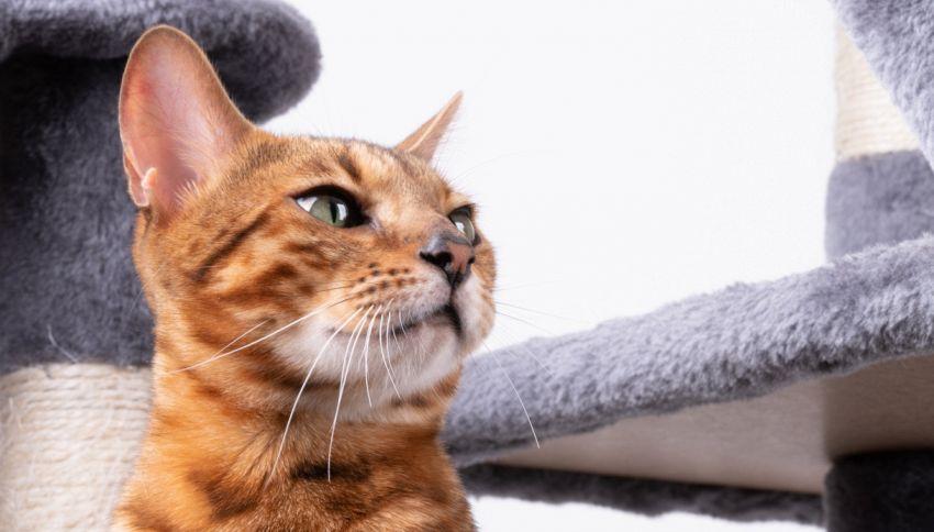 Nella cuccia tiragraffi lasciata fuori casa spunta un gattino