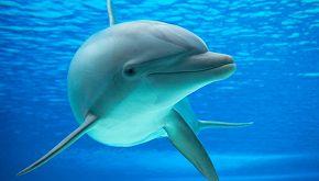 Una delfina nella nuova storia del veterinario che salva i ricci