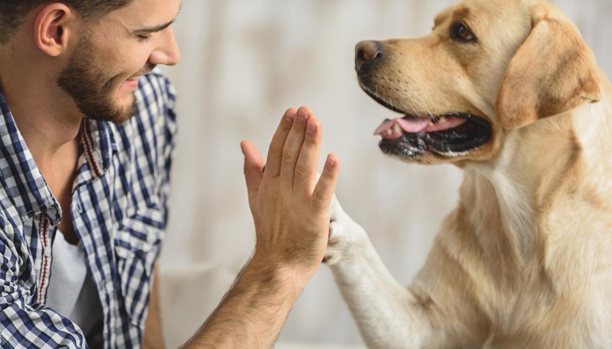 Quanti anni ha realmente il tuo cane?