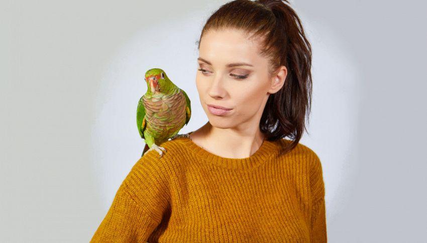 Il pappagallo 'volgare': la parolaccia che non smette di dire